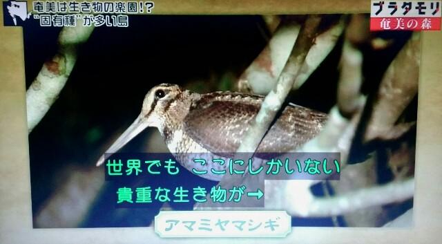 f:id:morifumikirikita319:20170325204151j:image