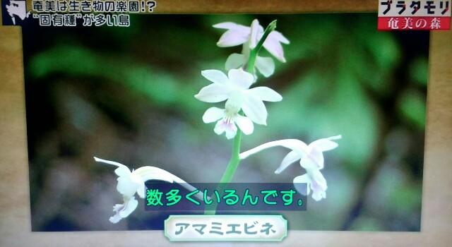 f:id:morifumikirikita319:20170325204206j:image