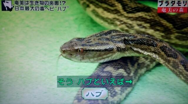 f:id:morifumikirikita319:20170325205423j:image