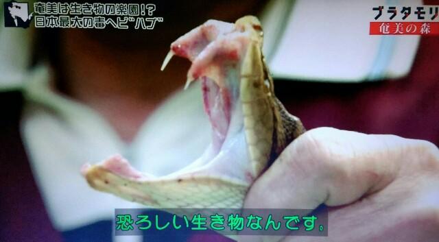 f:id:morifumikirikita319:20170325205440j:image