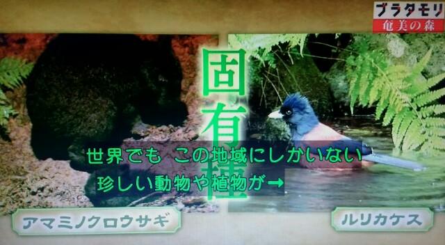 f:id:morifumikirikita319:20170325210755j:image