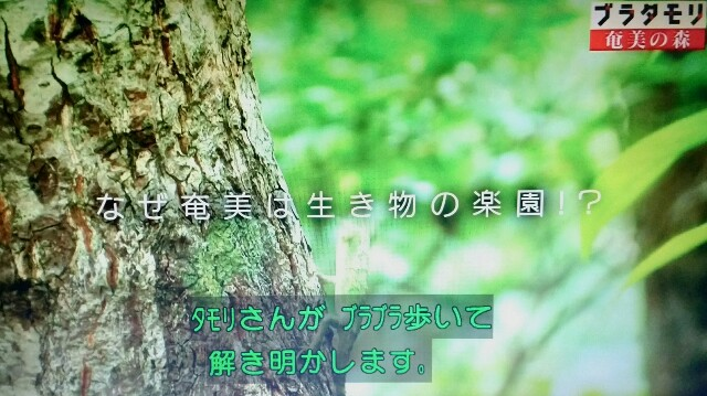 f:id:morifumikirikita319:20170325210809j:image