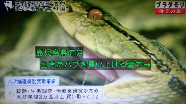 f:id:morifumikirikita319:20170325211716j:image