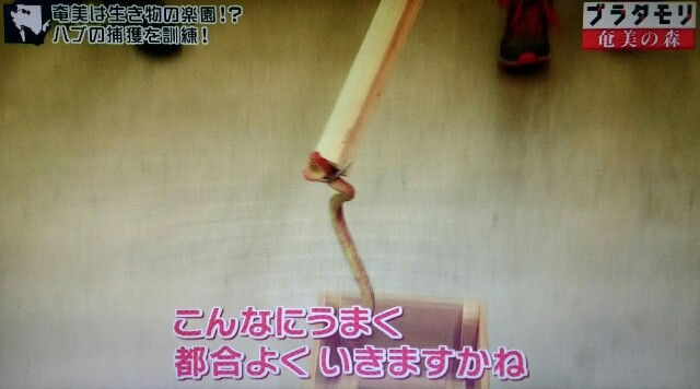 f:id:morifumikirikita319:20170325213119j:image