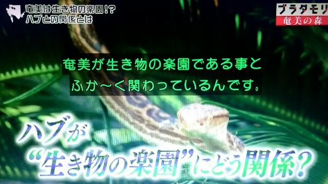 f:id:morifumikirikita319:20170325214222j:image