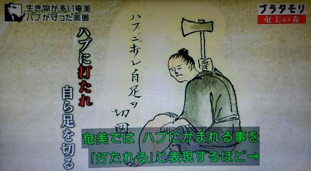 f:id:morifumikirikita319:20170325214345j:image