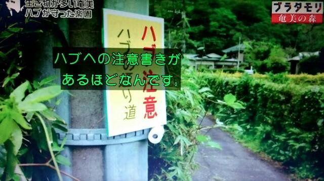 f:id:morifumikirikita319:20170325214357j:image