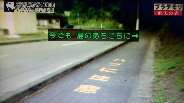 f:id:morifumikirikita319:20170325214409j:image