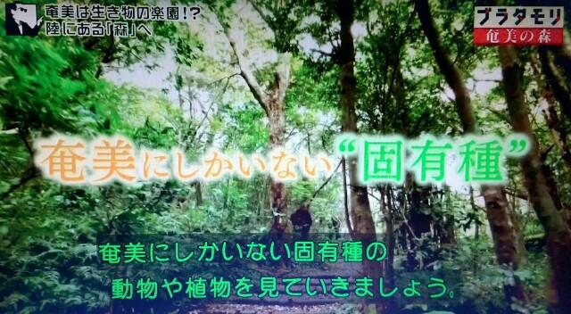 f:id:morifumikirikita319:20170325215856j:image