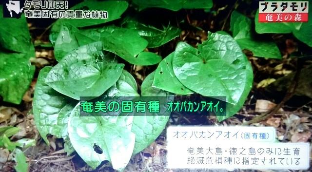 f:id:morifumikirikita319:20170325225442j:image