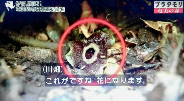 f:id:morifumikirikita319:20170325225502j:image