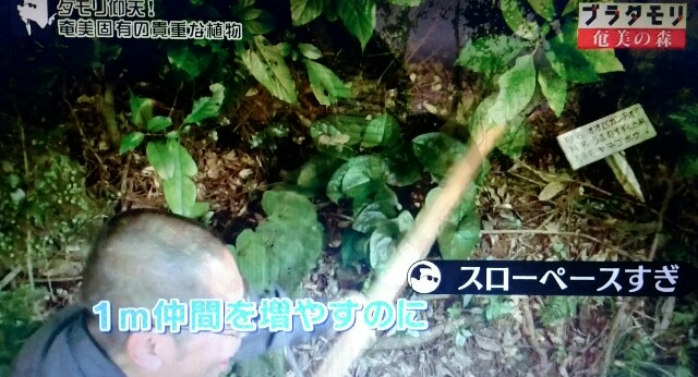 f:id:morifumikirikita319:20170325225520j:image