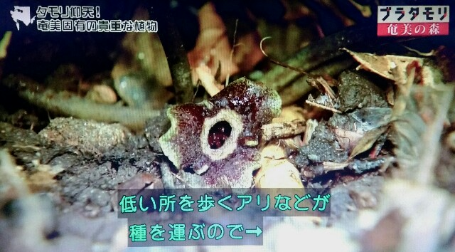 f:id:morifumikirikita319:20170325225539j:image