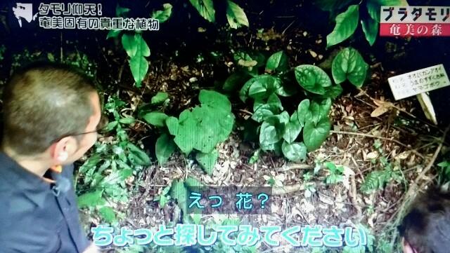 f:id:morifumikirikita319:20170325225551j:image