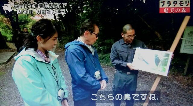 f:id:morifumikirikita319:20170325230754j:image