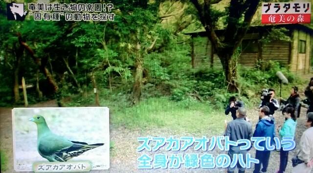 f:id:morifumikirikita319:20170325230821j:image