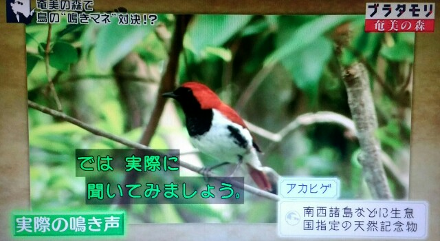 f:id:morifumikirikita319:20170325230856j:image