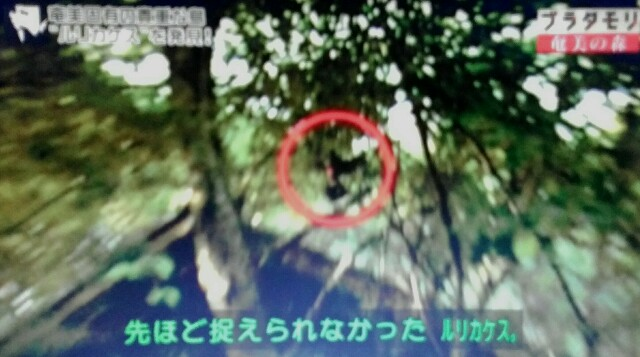 f:id:morifumikirikita319:20170325233437j:image