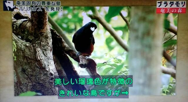 f:id:morifumikirikita319:20170325233514j:image