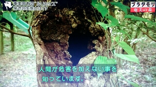 f:id:morifumikirikita319:20170325233610j:image