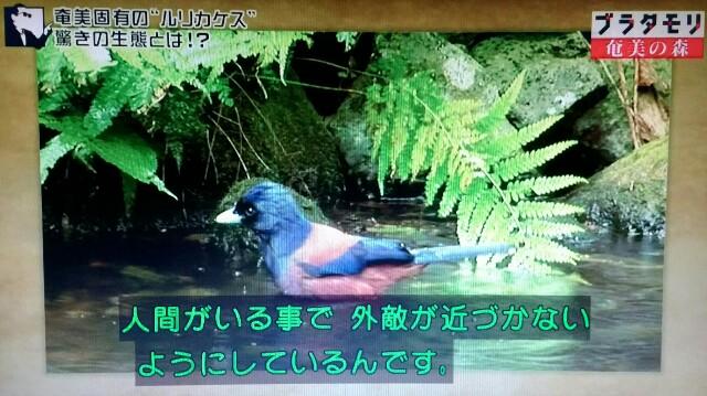 f:id:morifumikirikita319:20170325233627j:image