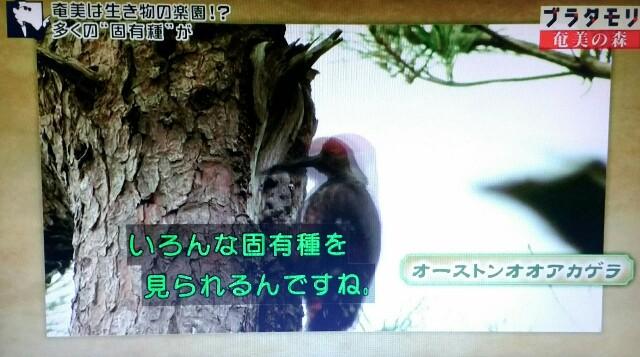 f:id:morifumikirikita319:20170325233715j:image