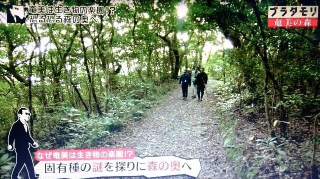 f:id:morifumikirikita319:20170325234921j:image