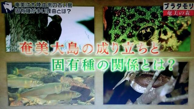 f:id:morifumikirikita319:20170326003020j:image