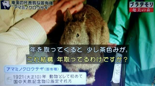 f:id:morifumikirikita319:20170326003152j:image