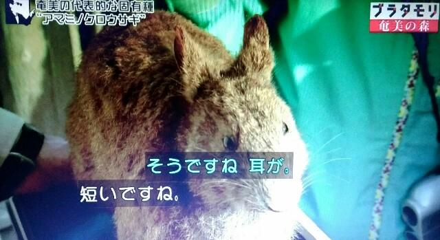 f:id:morifumikirikita319:20170326003205j:image