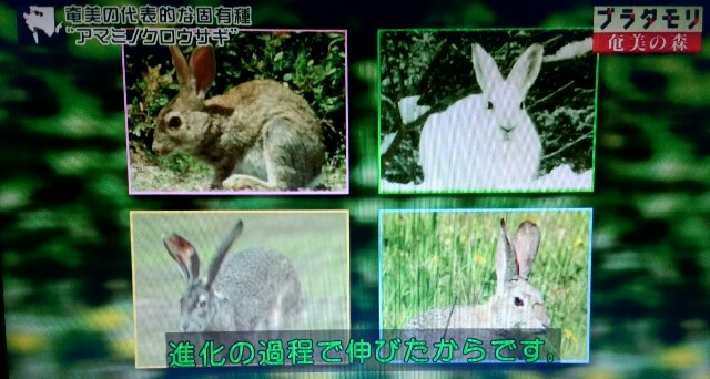 f:id:morifumikirikita319:20170326003233j:image