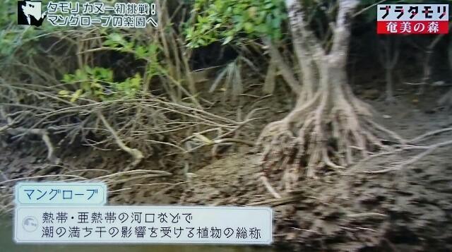 f:id:morifumikirikita319:20170326005111j:image