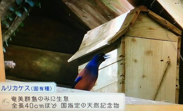 f:id:morifumikirikita319:20170326182609j:image