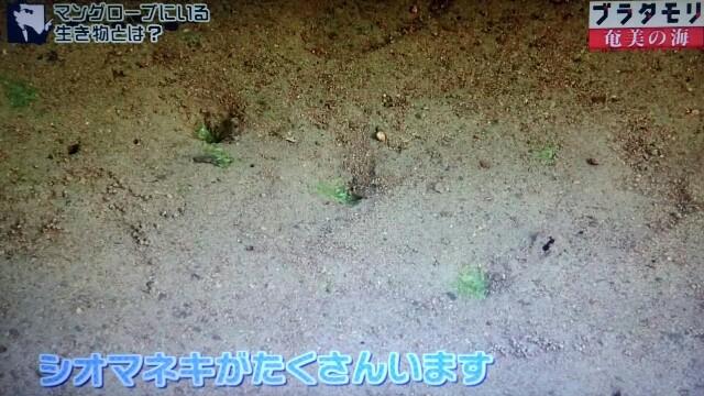 f:id:morifumikirikita319:20170401210053j:image