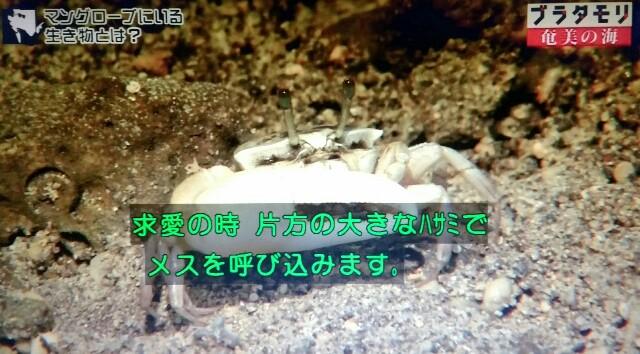 f:id:morifumikirikita319:20170401211623j:image