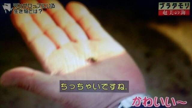 f:id:morifumikirikita319:20170401211709j:image