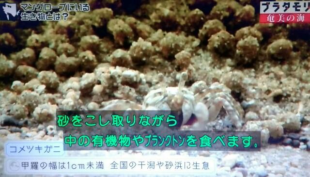 f:id:morifumikirikita319:20170401211738j:image