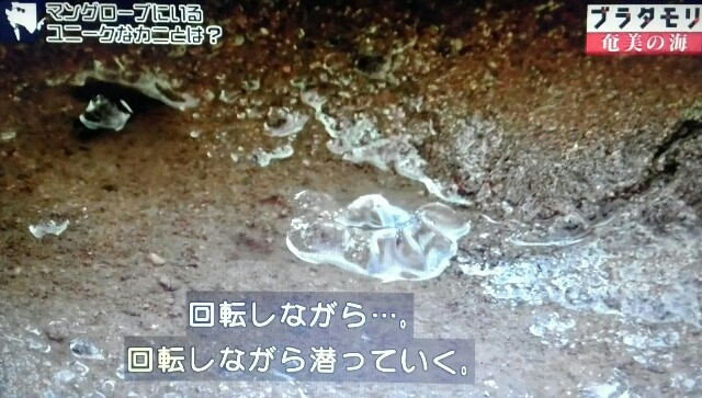 f:id:morifumikirikita319:20170401211841j:image