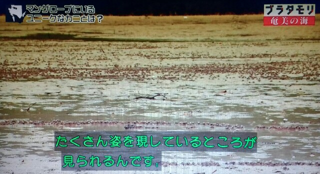 f:id:morifumikirikita319:20170401211928j:image