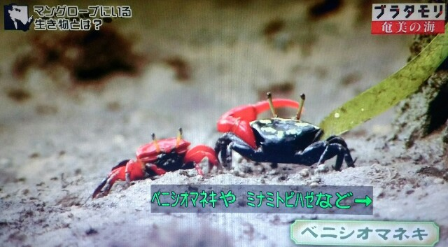 f:id:morifumikirikita319:20170401213441j:image