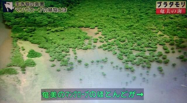 f:id:morifumikirikita319:20170401214711j:image