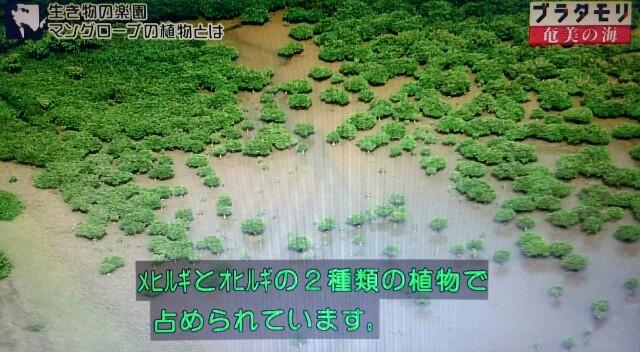 f:id:morifumikirikita319:20170401214723j:image