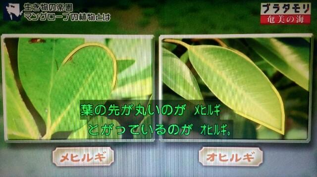 f:id:morifumikirikita319:20170401214742j:image