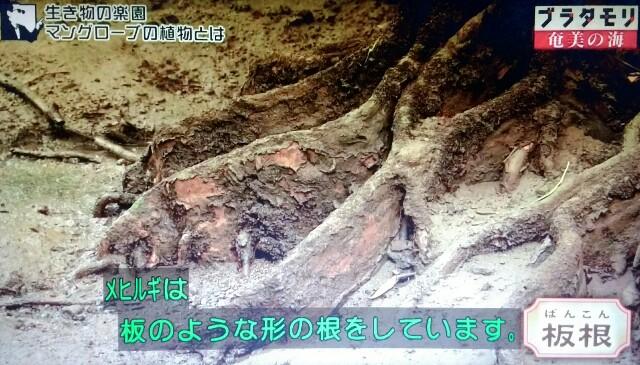 f:id:morifumikirikita319:20170401214816j:image