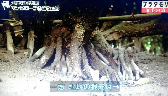 f:id:morifumikirikita319:20170401214829j:image