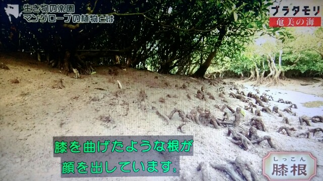 f:id:morifumikirikita319:20170401214943j:image