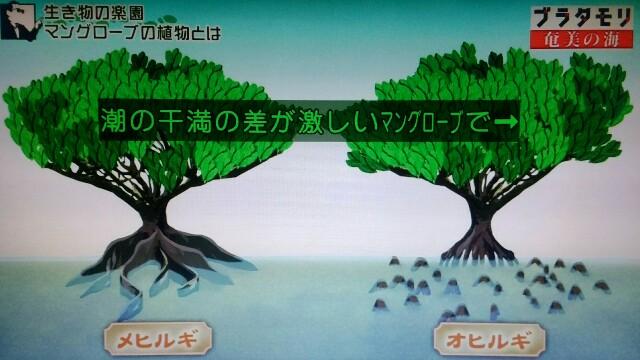 f:id:morifumikirikita319:20170401215447j:image