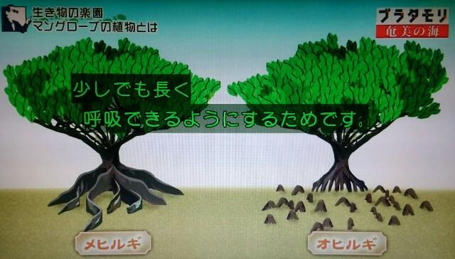 f:id:morifumikirikita319:20170401215502j:image