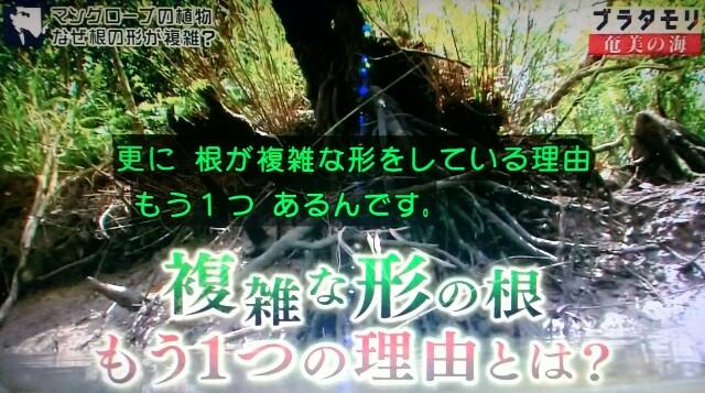 f:id:morifumikirikita319:20170401215516j:image