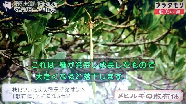 f:id:morifumikirikita319:20170401220217j:image